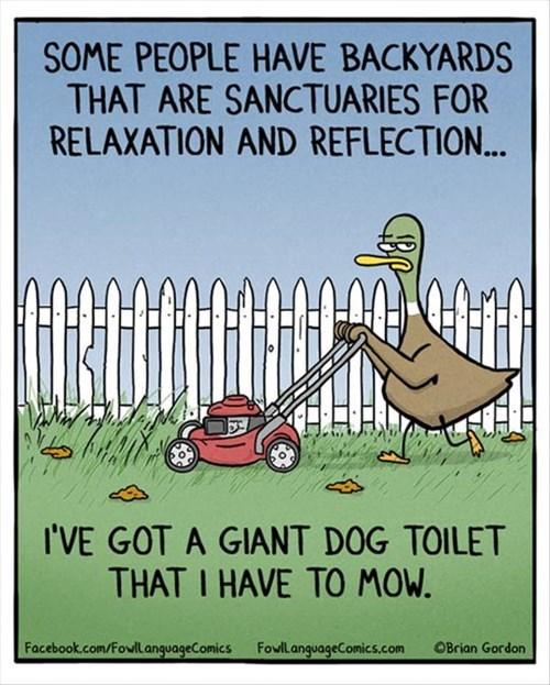 ducks dogs lawn lawnmower - 8330443520