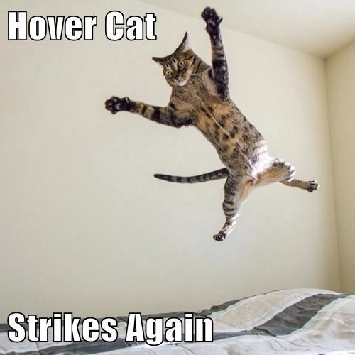 Hover Cat  Strikes Again