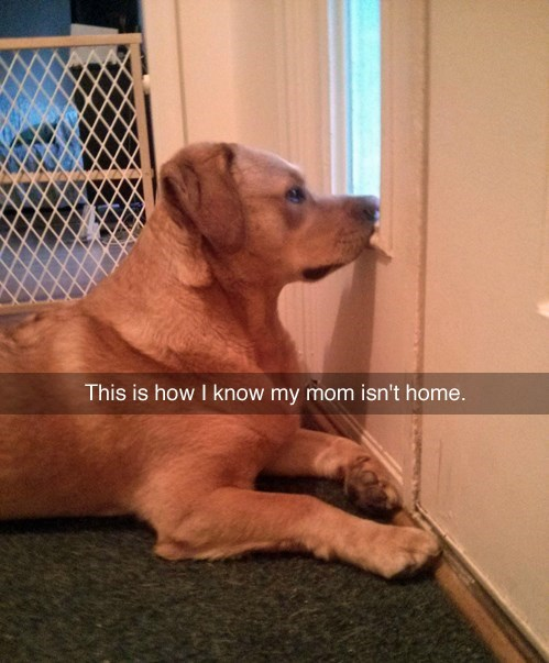 dogs,mom,waiting