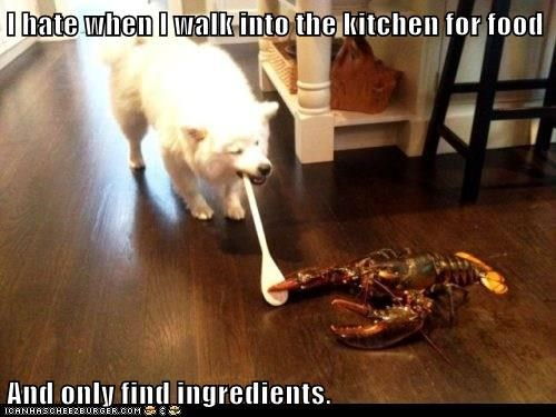 lobster,dogs,food