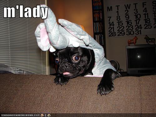 elephant dogs pug - 8331364096