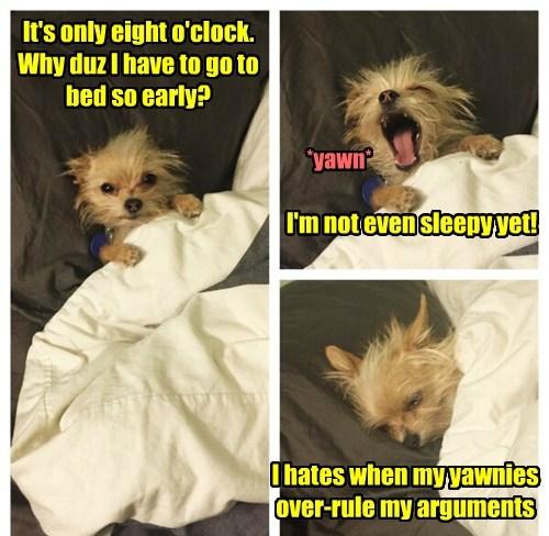 dogs puppy sleeping - 8331433472