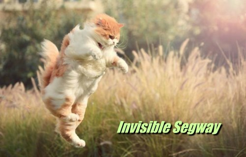 Cats,invisible,segway