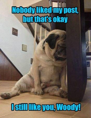 dogs pug social media post - 8331569408