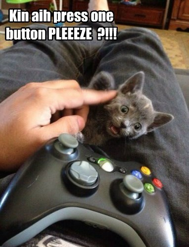 Cats,kitten,video games