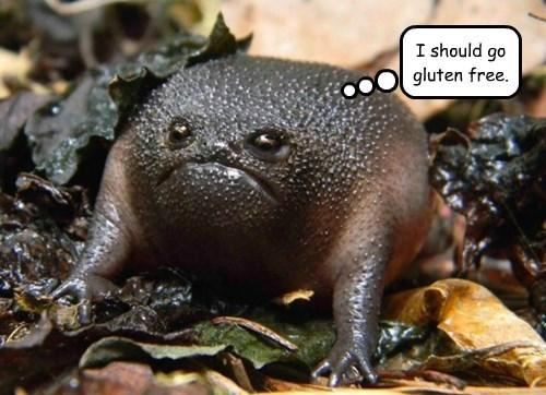 toad,gluten,grumpy