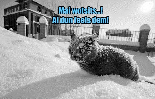 Cats,cold,snow