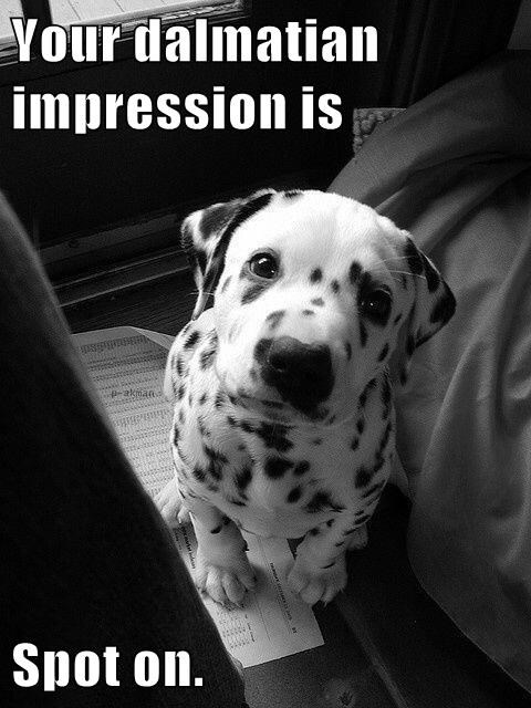 dalmation dogs puns puppy - 8332024064
