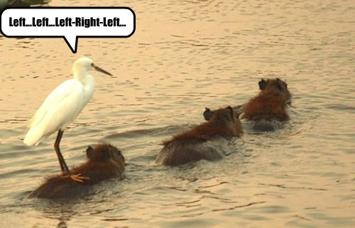 capyberra drill instructor birds - 8332058880