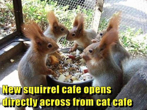 rival,squirrel,Cats,cafe