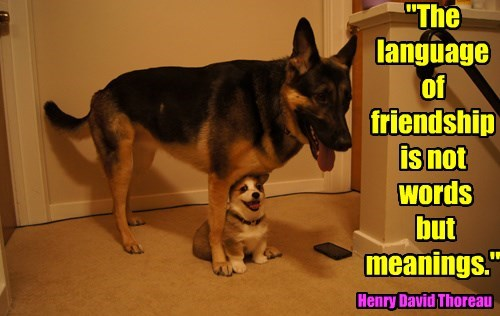 friendship meanings dogs words language caption - 8332438016