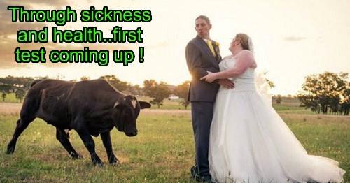 bull wedding married - 8332523520