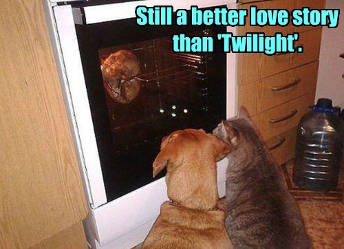 dogs,twilight,food,Cats
