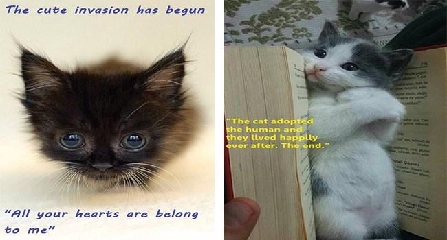 funny cat memes funny memes Memes funny cats Cats funny cat memes - 8332549