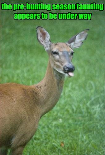 raspberry taunting deer hunting - 8332600320