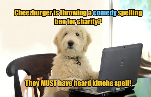 Cats,dogs,Cheezburger spelling bee