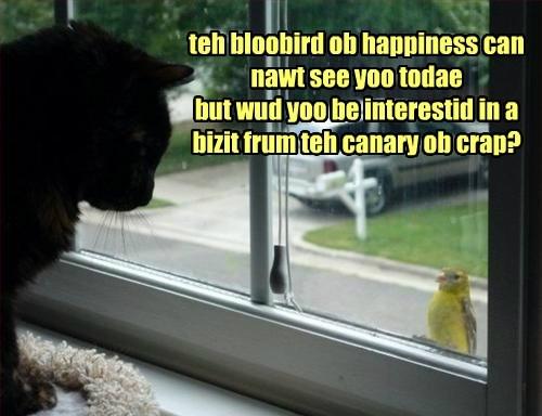 Cats black cat birds - 8332686848