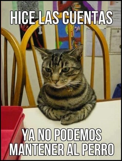 gatos bromas Memes animales - 8332700160