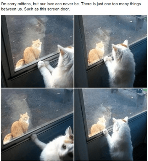 Cats shakespeare unrequited love - 8332712192