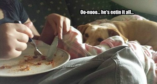 dogs labrador food - 8332743168