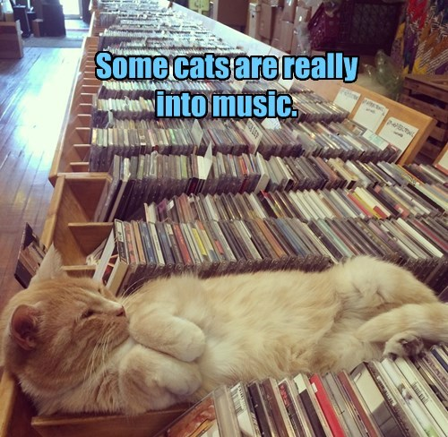 Some cats are really into music.