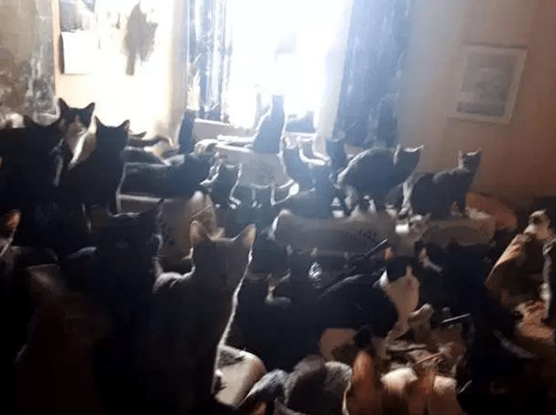 insane toronto cat rescue 300 Cats rescue - 8332805