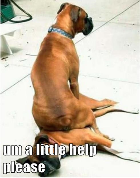 dogs captions funny - 8332827904