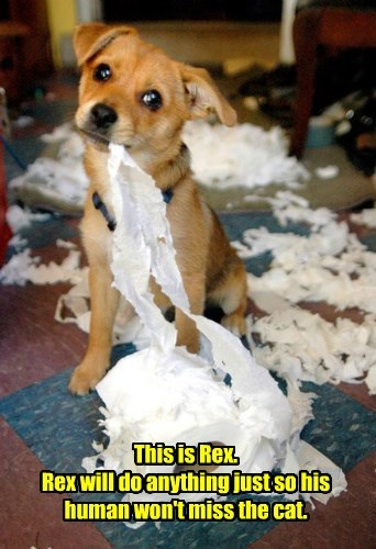 dogs shredded toilet paper Cats rex
