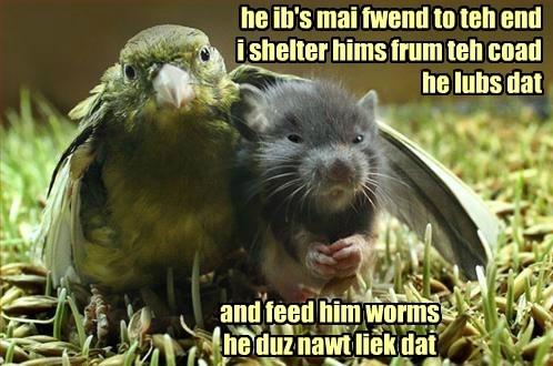 friends bird mouse - 8333075712