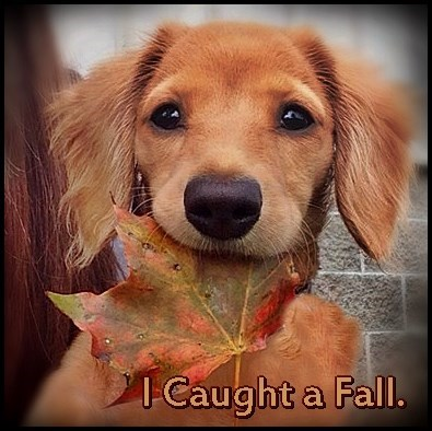 dogs fall puppy squee - 8333264128