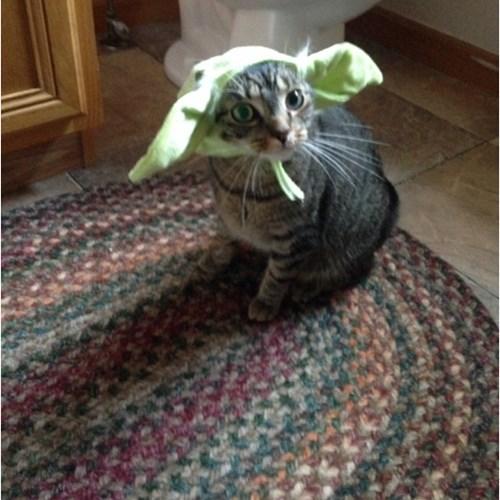 Cats Jedi star wars yoda - 8333359616