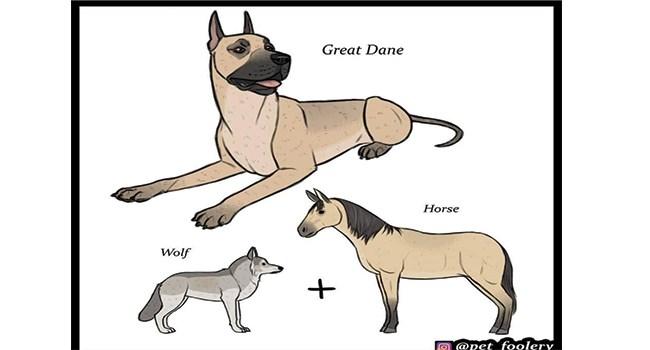 wolves dogs funny comics comics lol domestic dogs funny dog comics - 8333573