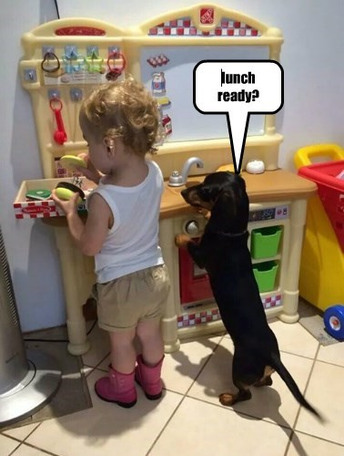 dogs captions funny - 8333657088