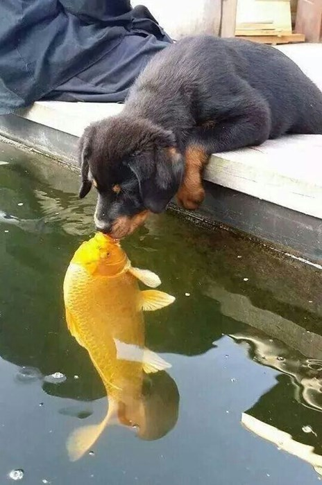 cute dogs fish puppy kissing