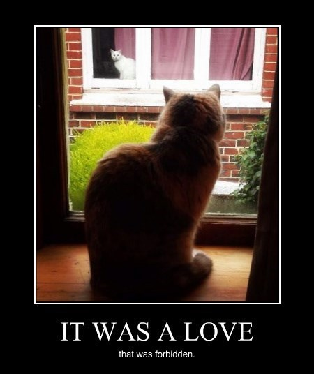 Cats,funny,romeo & juliet,love,romeo & juliet