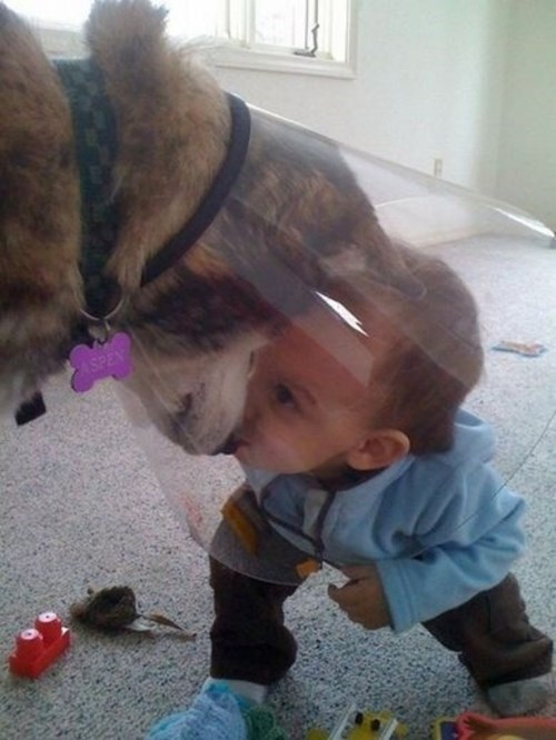 dogs,cone of shame,kids,parenting