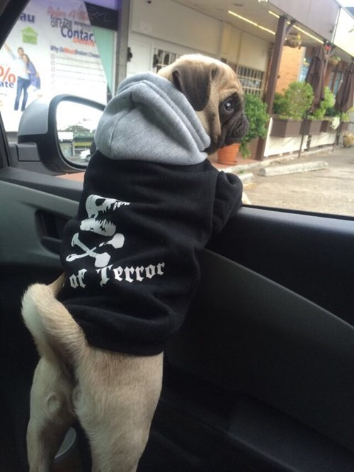 dogs pug poorly dressed hoodie g rated - 8334145792