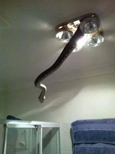 australia bathroom Kill It With Fire snake g rated fail nation