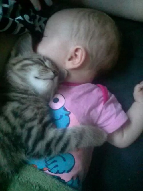 baby,Cats,cute,parenting