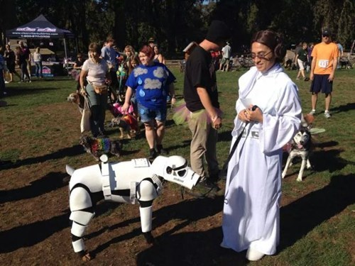 costume,dogs,star wars,poorly dressed,stormtrooper,Princess Leia,g rated