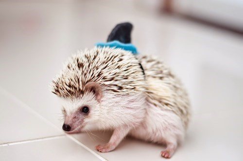 costume hedgehog poorly dressed shark - 8334995200