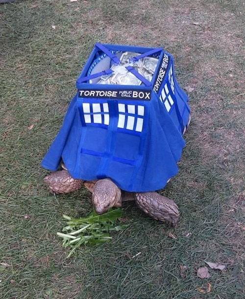 pets tardis doctor who turtle g rated win - 8335303936