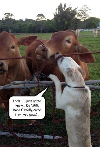 bones dogs cows milk bone - 8335682048