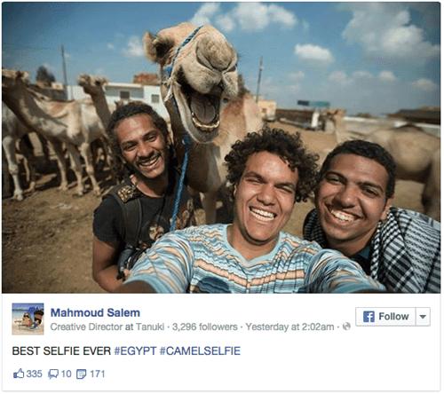 camel cute selfie - 8335813376