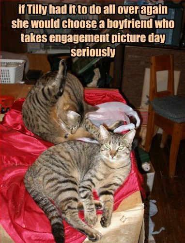inappropriate engaged Cats - 8335825152