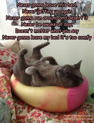 Cats bed rickroll sleeping - 8335837952