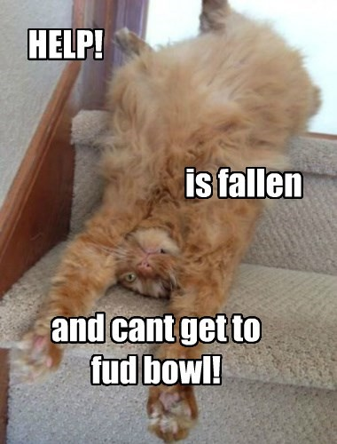 HELP! is fallen and cant get to fud bowl!