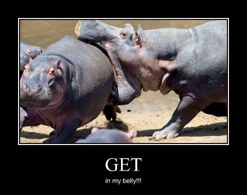 hippo hungry funny wtf - 8335997184