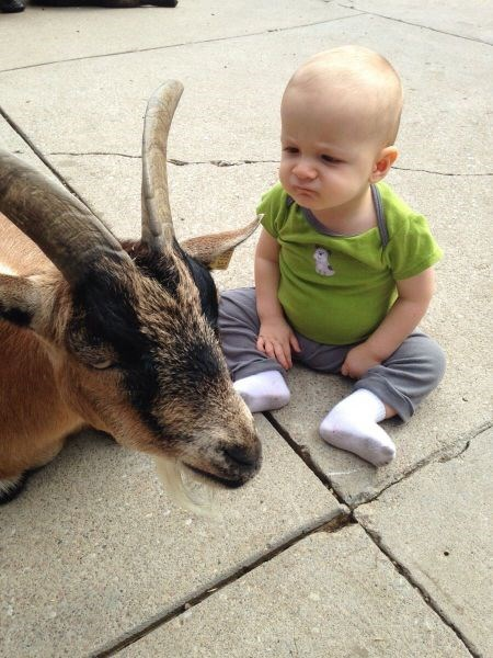 baby expression goats parenting - 8336015360