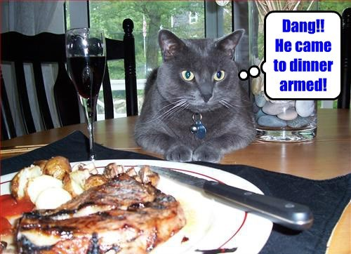 foiled,dinner,Cats